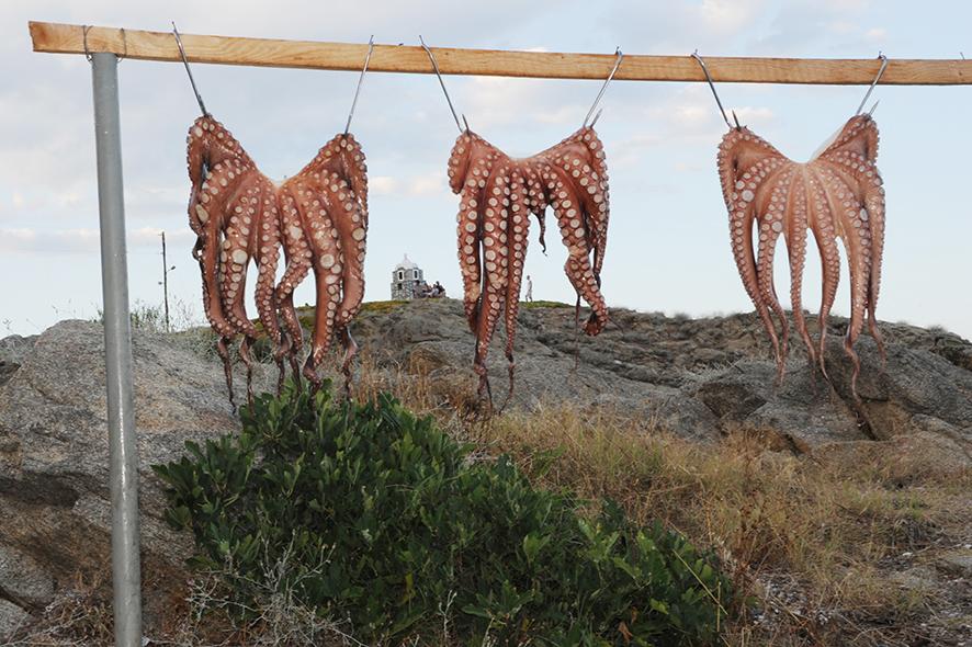 Oktopus in Sarti (Lecker)