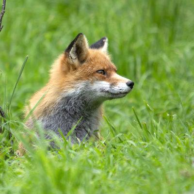 Fuchs-Tierpark Mautern