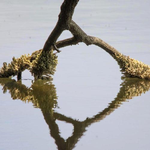 Algen auf Baum